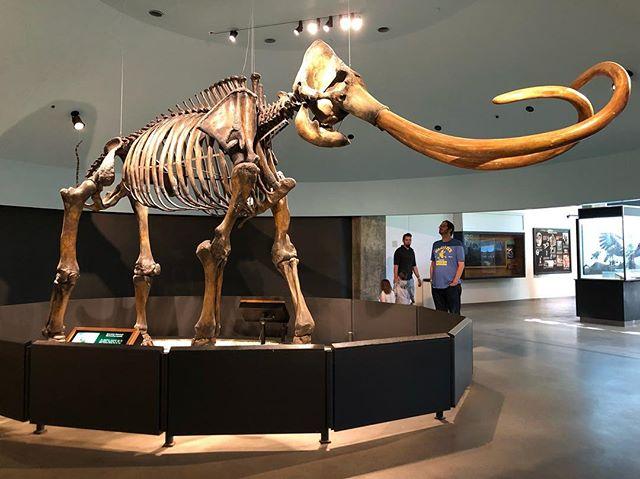 Dinosaur display in the lobby of La Brea Tar Pits and Museum in LA in California. | 1 Week in Los Angeles, California