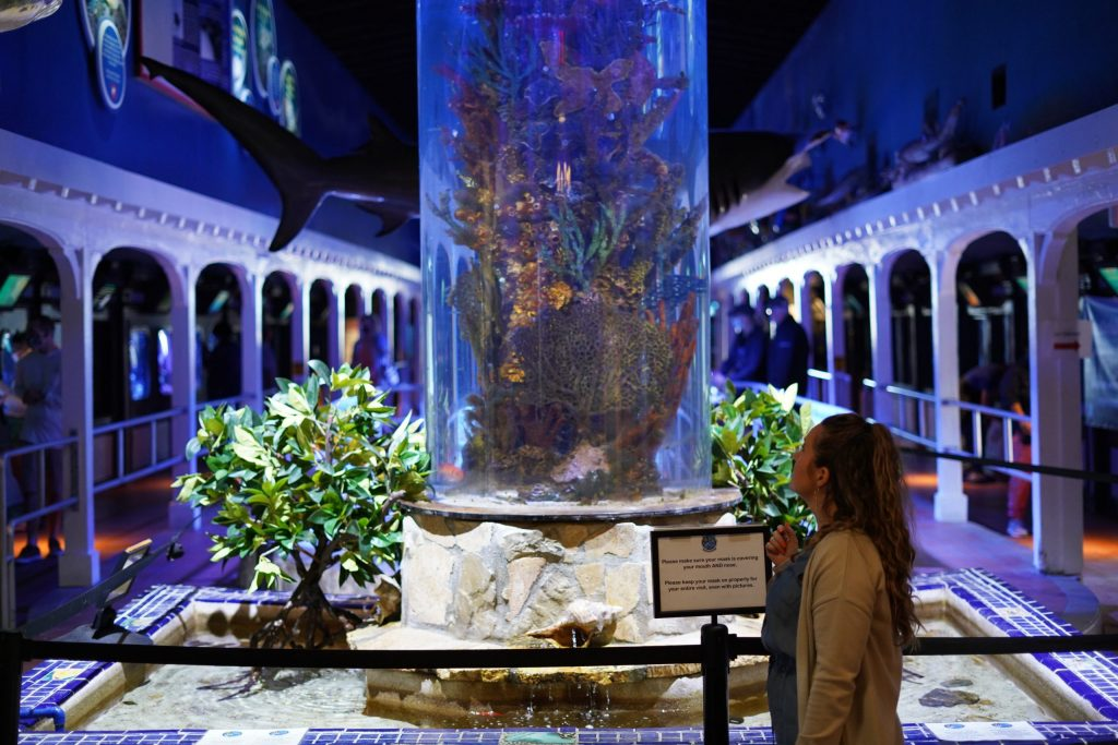 Woman standing in the lobby of the Key West Aquarium looking at the fish in the tank in Key West. | What you to need to know about Key West