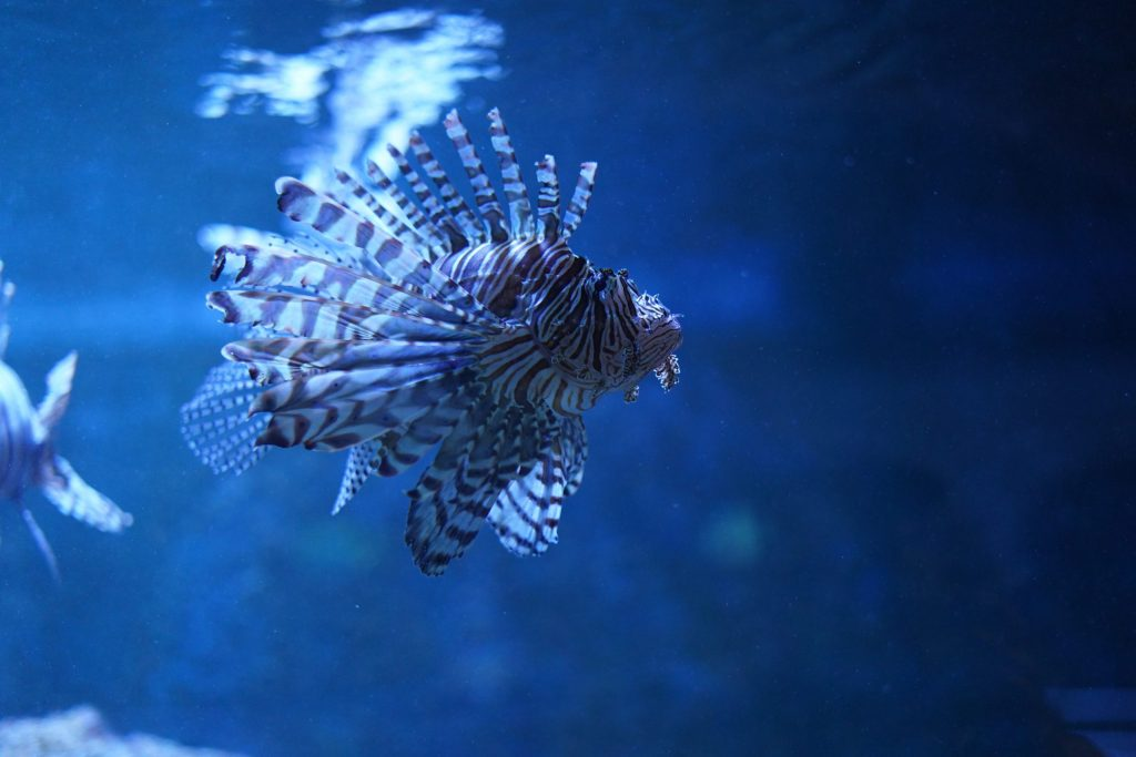 Fish swimming in the tank in Key West. | What you to need to know about Key West